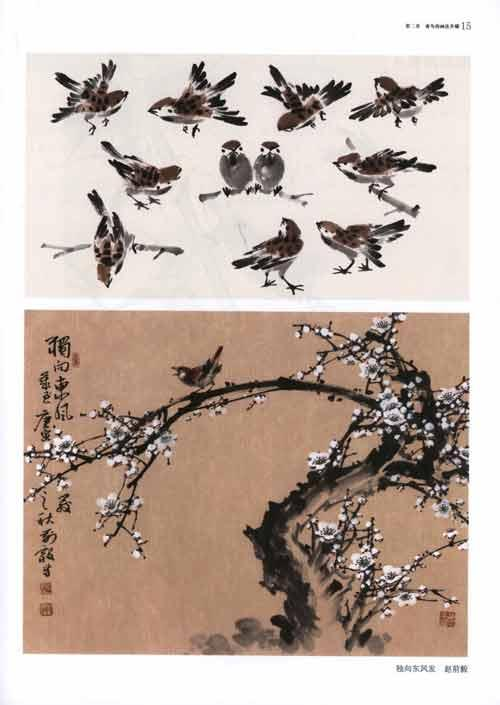 禽鸟的画法步骤  麻雀的画法