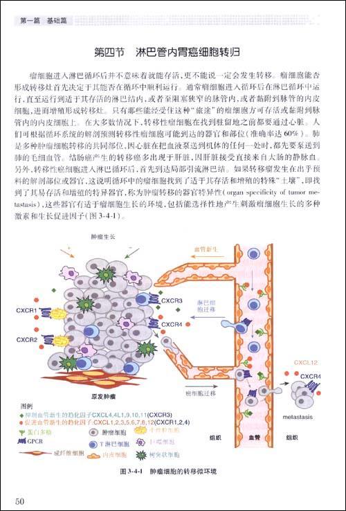 淋巴管系统的组织结构和功能