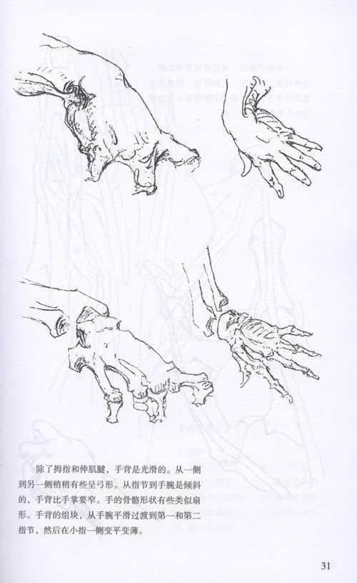 《伯里曼画手》是美国经典基础绘画《伯里曼人体结构