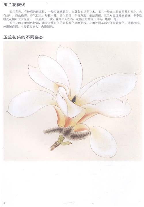 工笔花卉画法》()【简介|评价|摘要|在线阅读