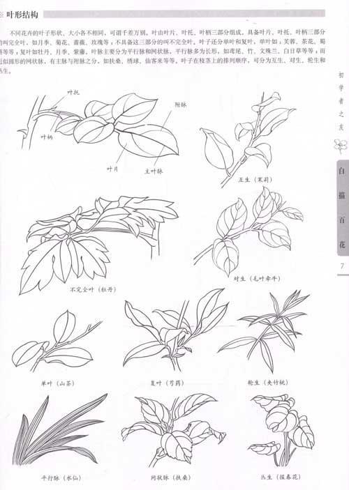 目录 百花概述 工具与材料 用笔 花卉的结构 花卉的分类