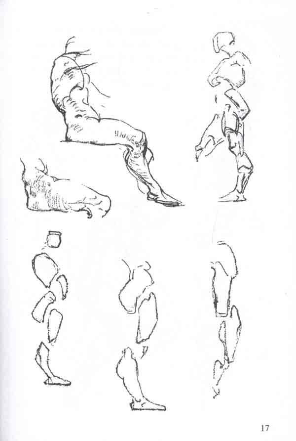 伯里曼人体结构全书