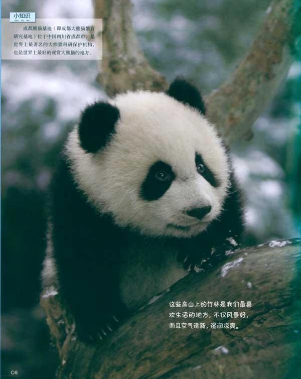 """我的生活秀 长大以后 大熊猫的""""小秘密"""" 术语表  用户评分: 0."""
