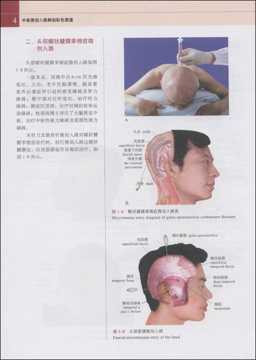 脊柱解剖结构图解pdf