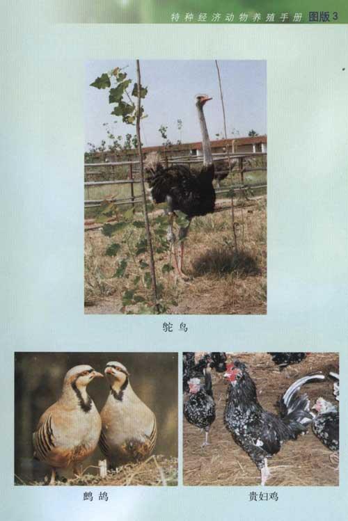 特种经济动物养殖手册--农民实用技术-文轩网